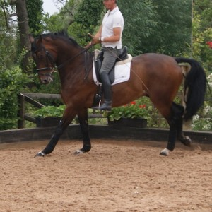 Carl Hester uses Leisure Ride Surface